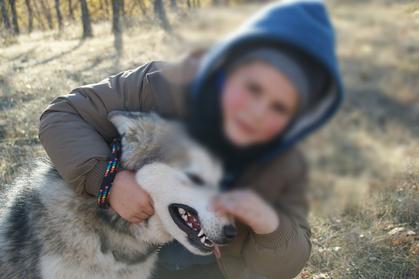 alaskan malamute en españa